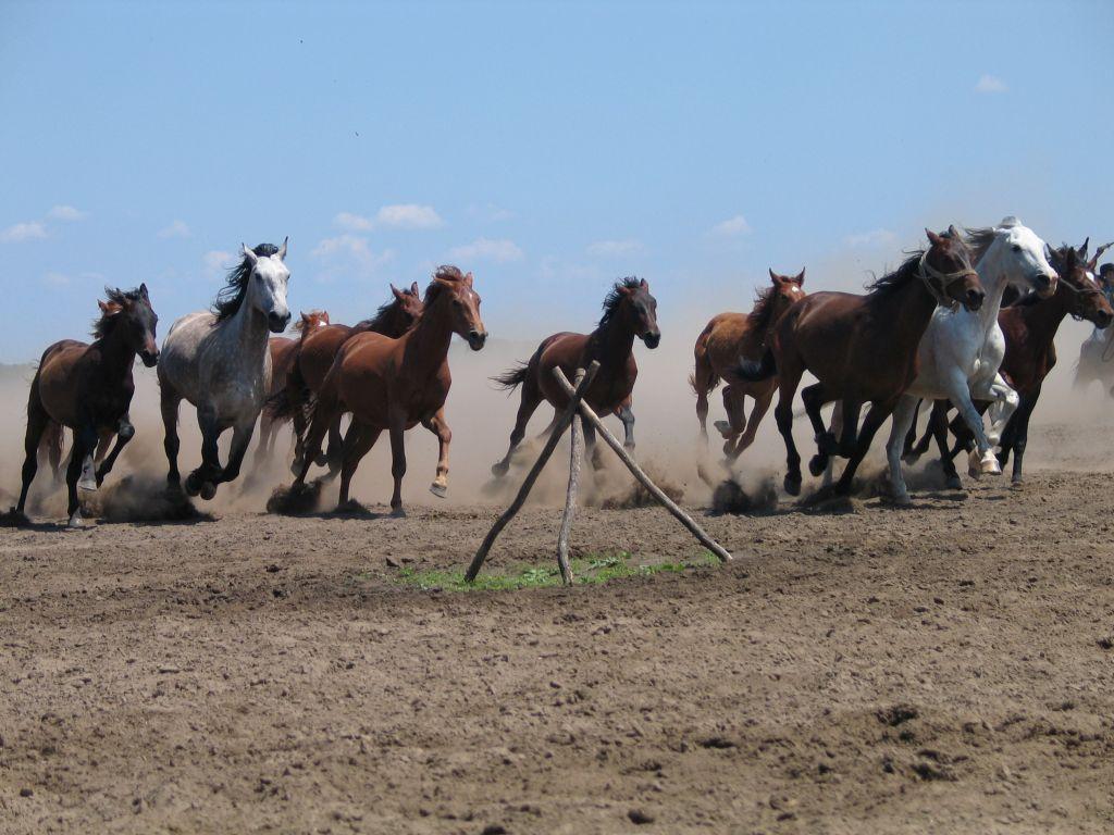 Heste på puzstaen - reduceret str