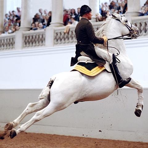 show-den-spanske-rideskole